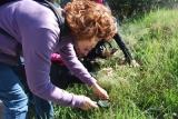 Fotografies de la sortida per reconèixer les orquídies dels boscosd'Avinyó