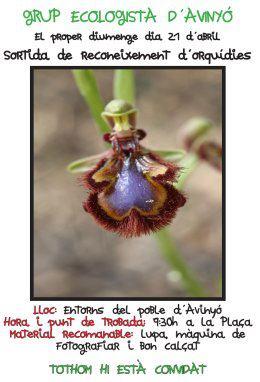 gea orquidies