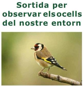 gea ocells entorn